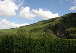 Wolf , Mosel